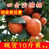 正宗广东四会沙糖桔新鲜10斤装整箱无核砂糖橘柑桔子孕妇水果